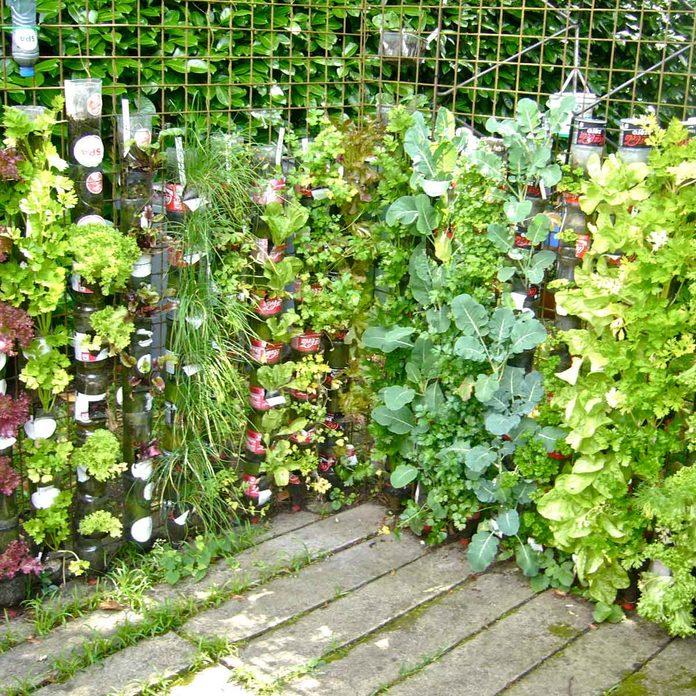 plant flower wall