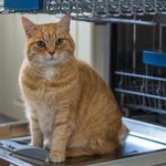14 Things You Didn't Know You Could Wash in the Dishwasher