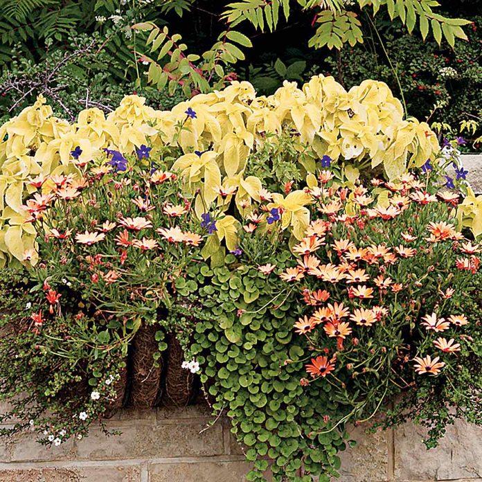 overflowing flower window box