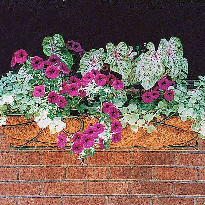 mini-gardens window box flowers