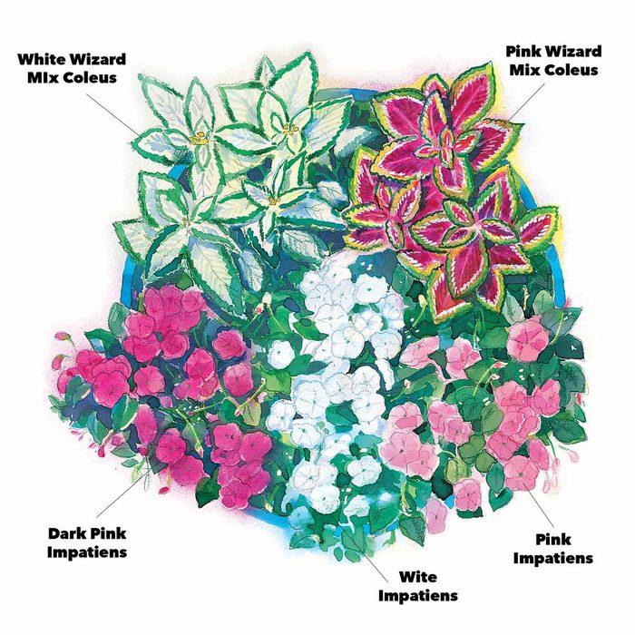 mini-garden impatiens and wizard mix coleus flowers