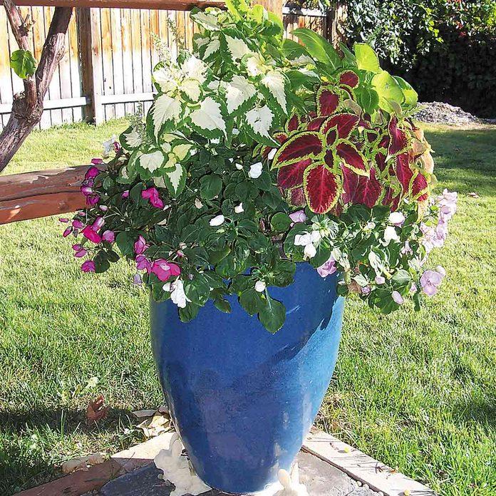 blue flower container mini gardens