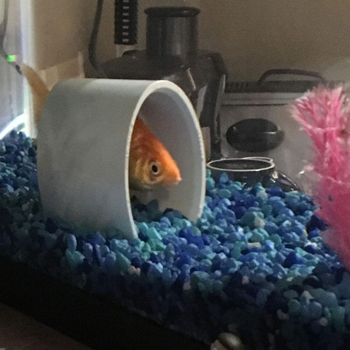 pvc goldfish fish house