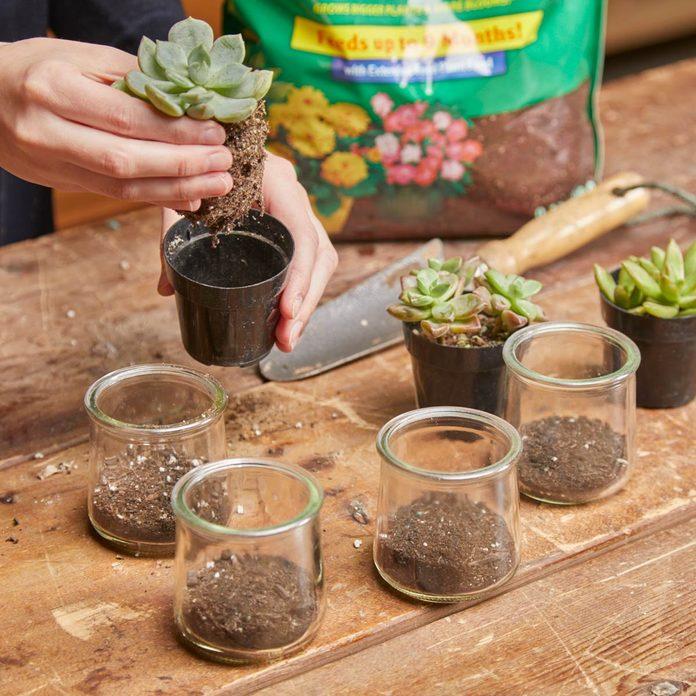 re pot succulents into glass jars