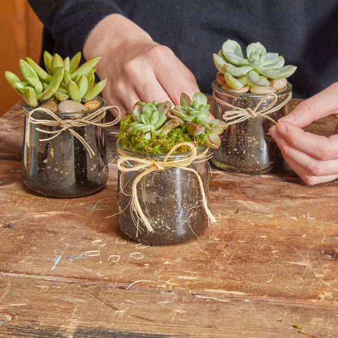 glass succulent jar finished project