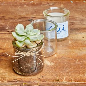 Planting Succulents in Recycled Glass Jars