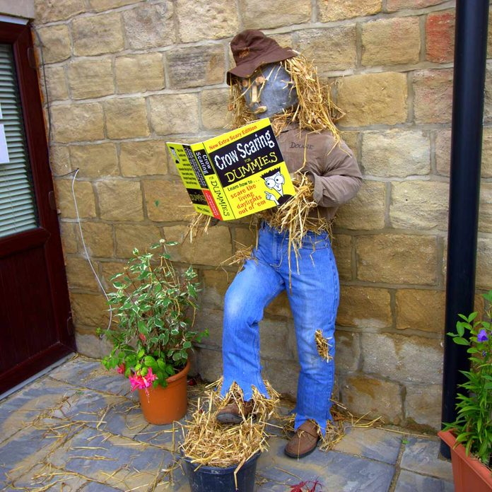 scarecrow reading