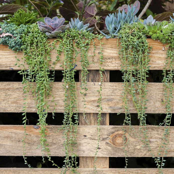 Decorate a Fence