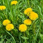 Get Rid of Clover and Other Yard Nuisances With These 10 Tips