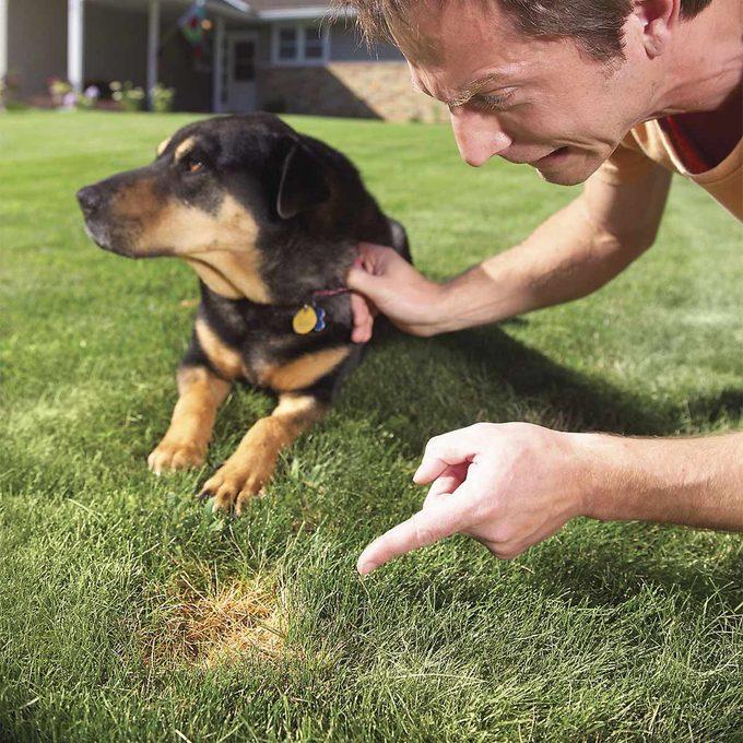 pet spots in yard