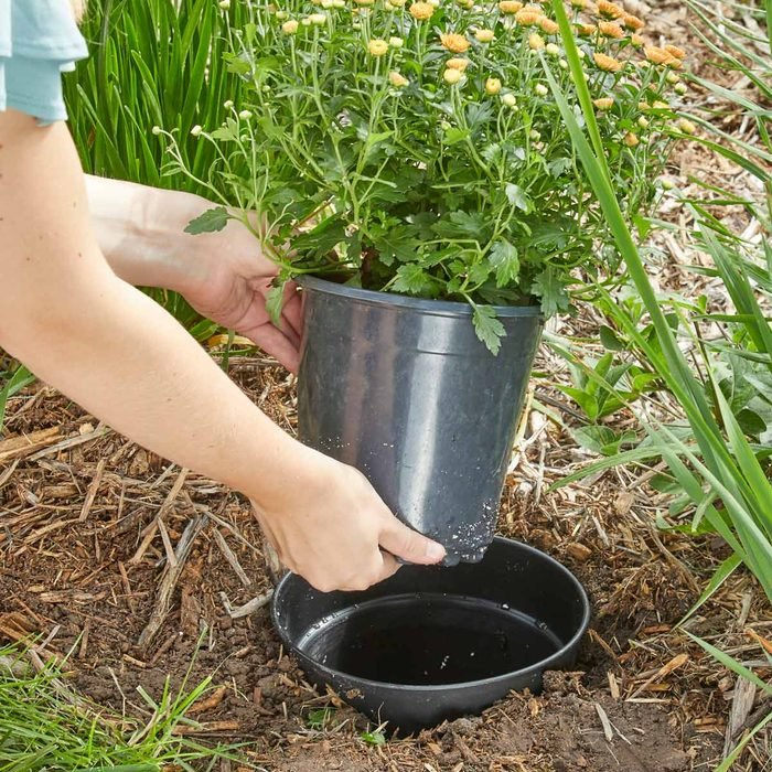 plant in a pot landscaping design seasonal mums HH Handy Hint