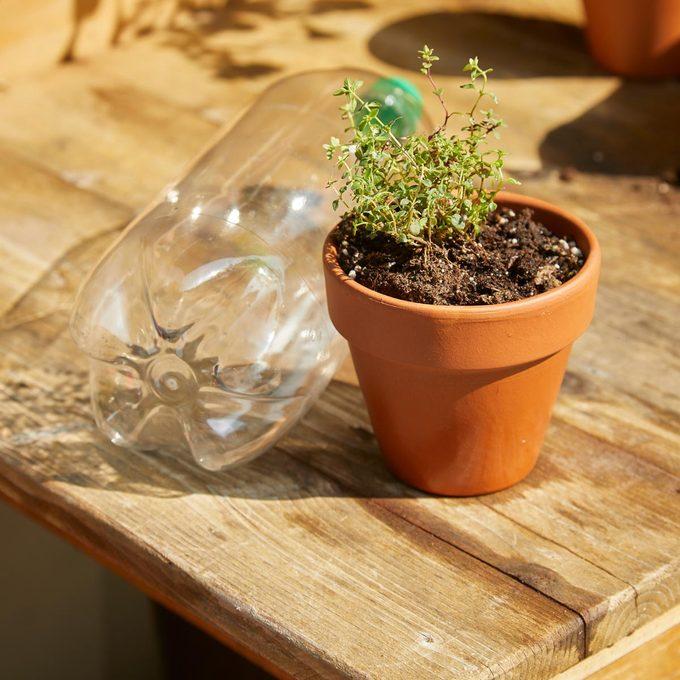 HH Handy Hint Micro green house 2 liter pop bottle