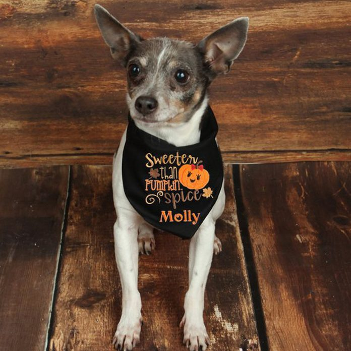 pumpkin spice dog bandana