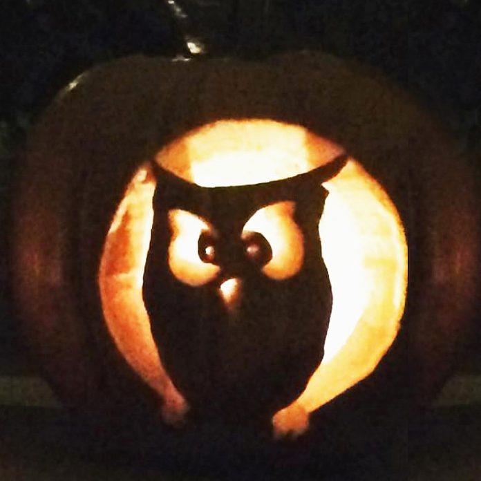 owl hoot halloween pumpkin carving jack o'lantern