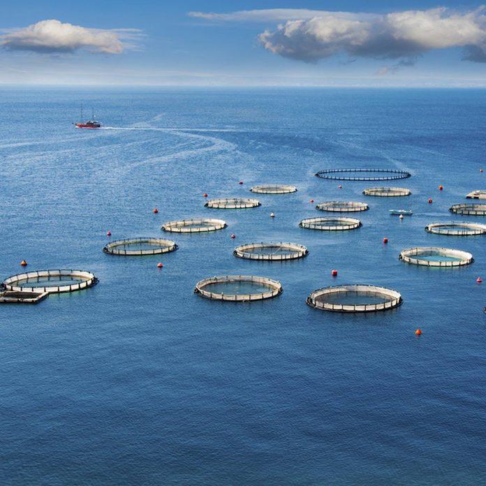 fishery ocean water