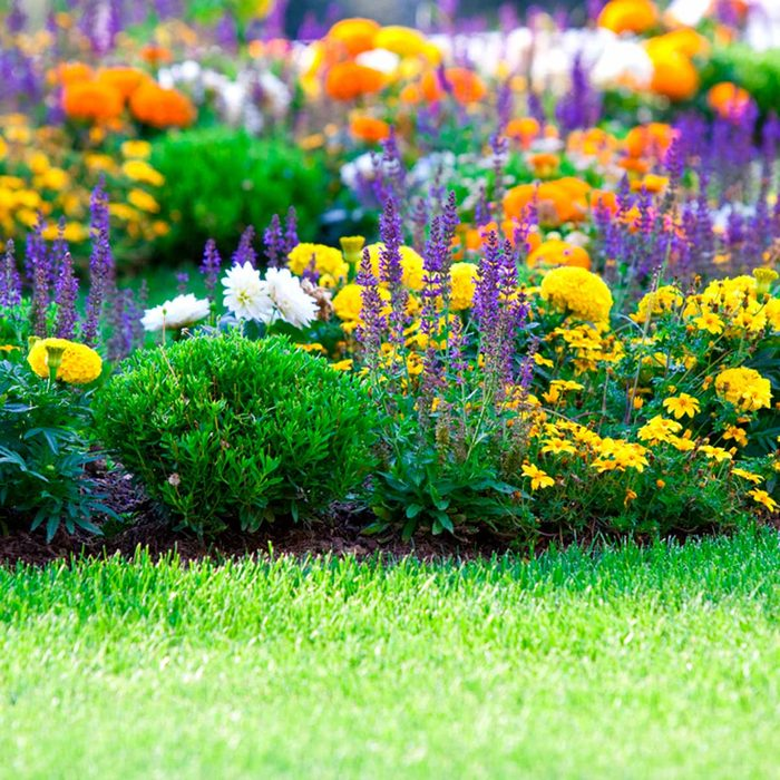 flowers garden bloom