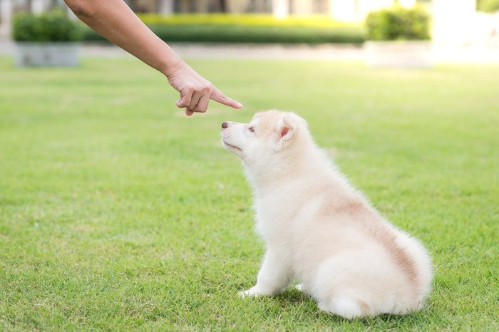 bad behavior dog being punished by owner