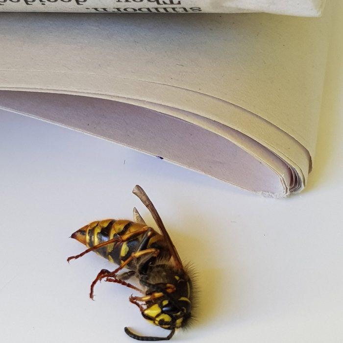 Bee-Newspaper