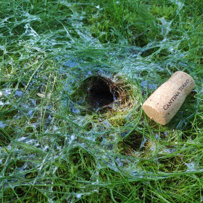 Slug Hole In Yard