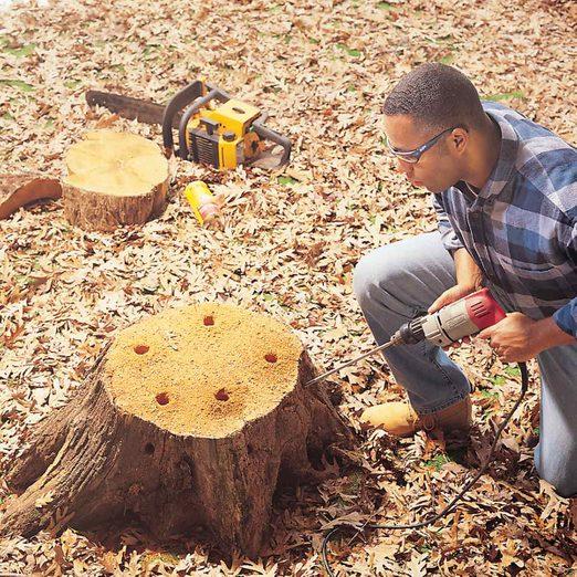 remove a tree stump