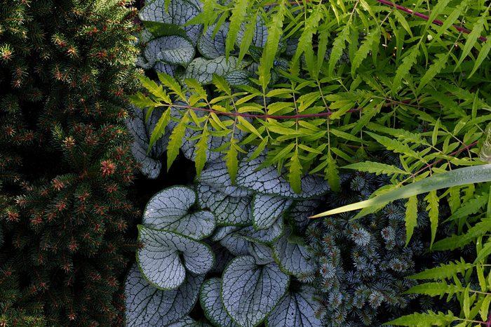 Shade garden plant combination