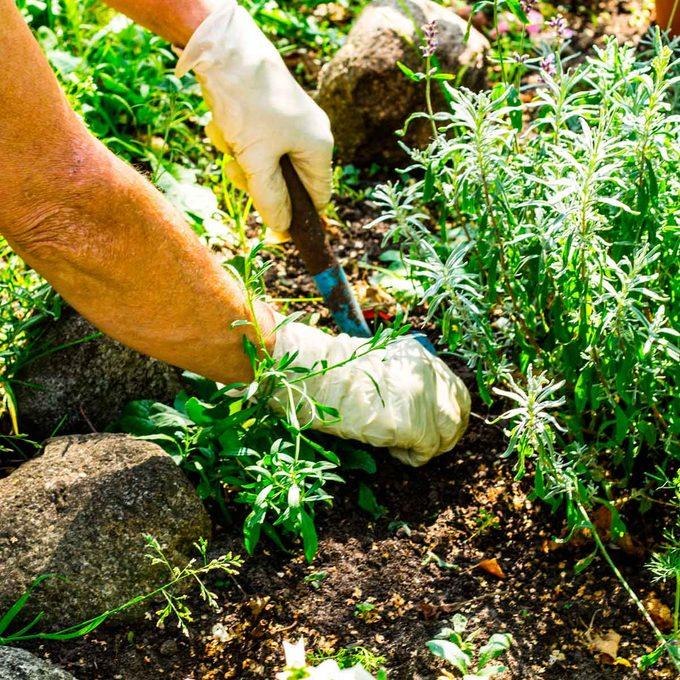 weeds in flower beds