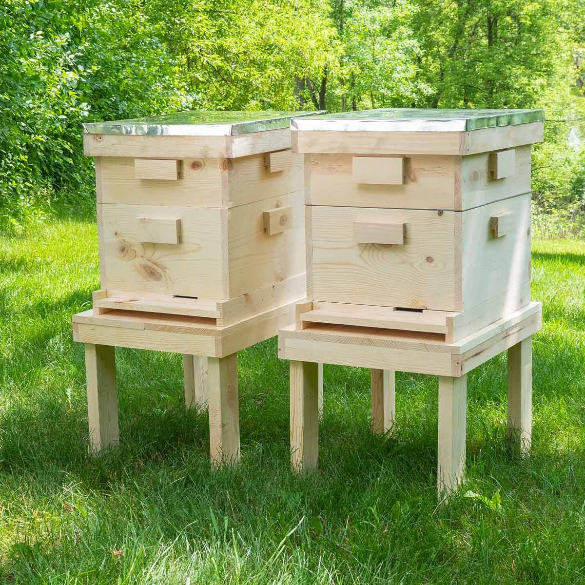 bee hive featured photo