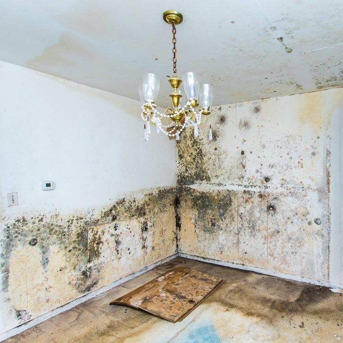 Moldy-walls-in-an-abandoned-home
