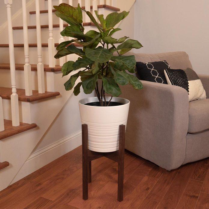 modern plant stand lede