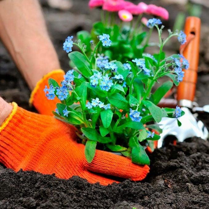 low maintenance flower bed