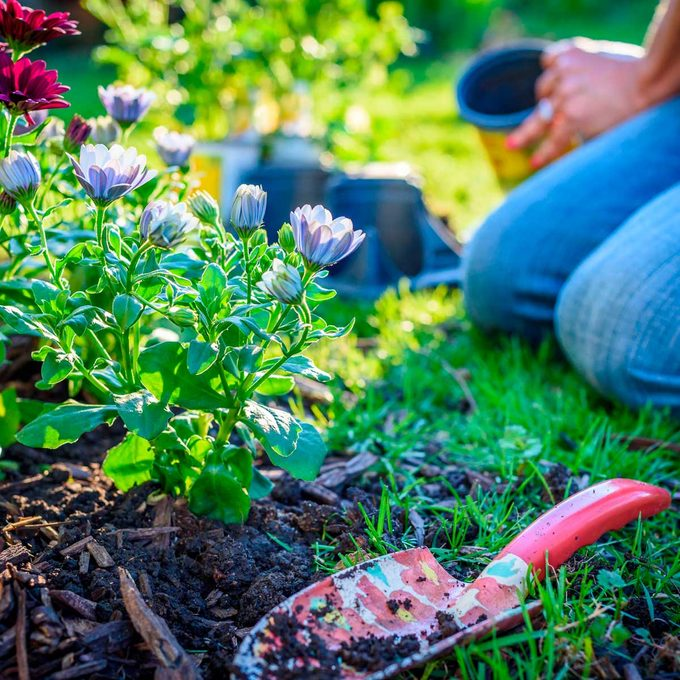 flower bed mulch
