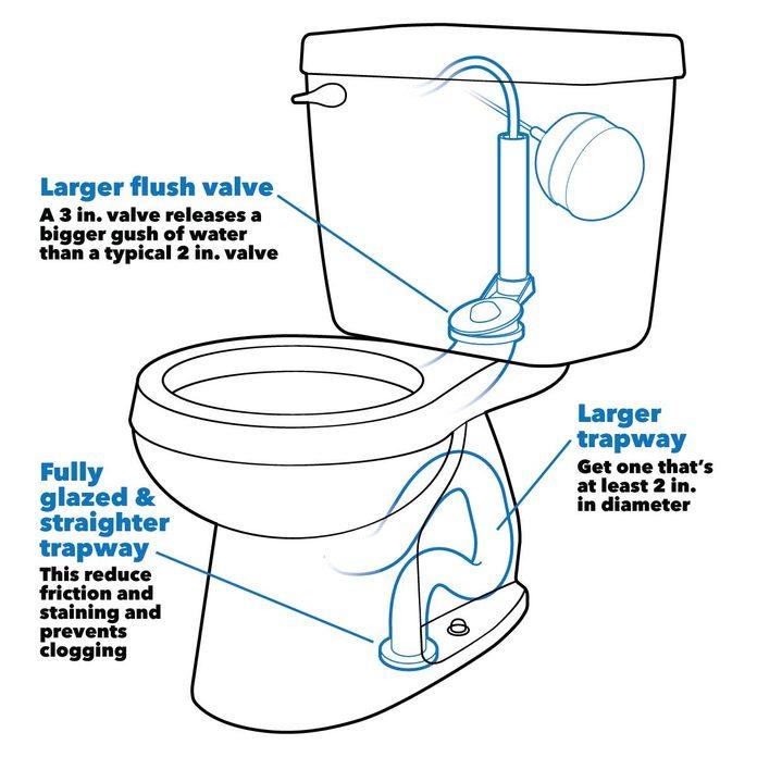 buying toilet tips anatomy