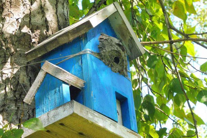 Wasp Nest In Bird House