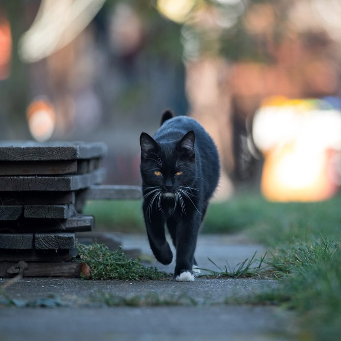 black cat goes to the street