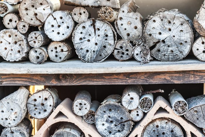 An insect hotel, also known as a bug hotel or insect house, created to provide shelter for insects. It consist of several different sections that provide insects with nest.