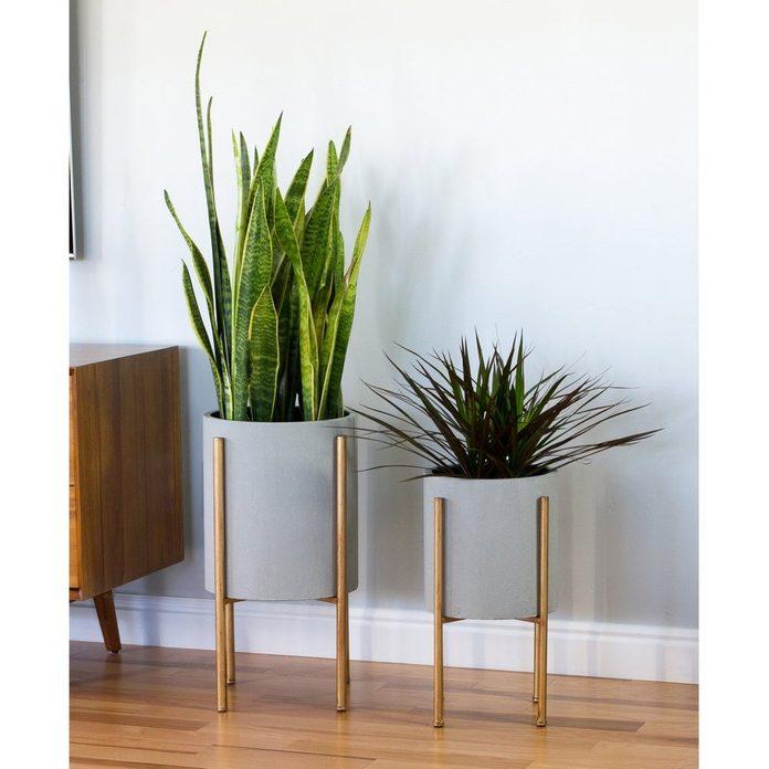 taller plant