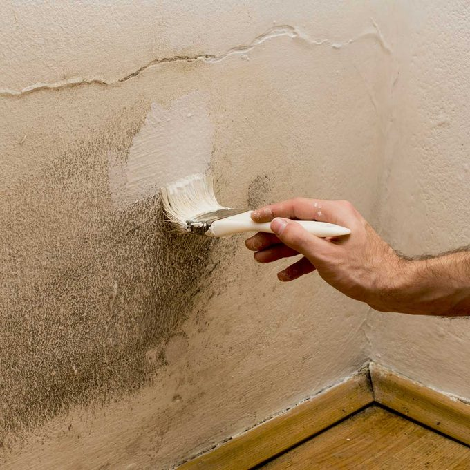 painting mold