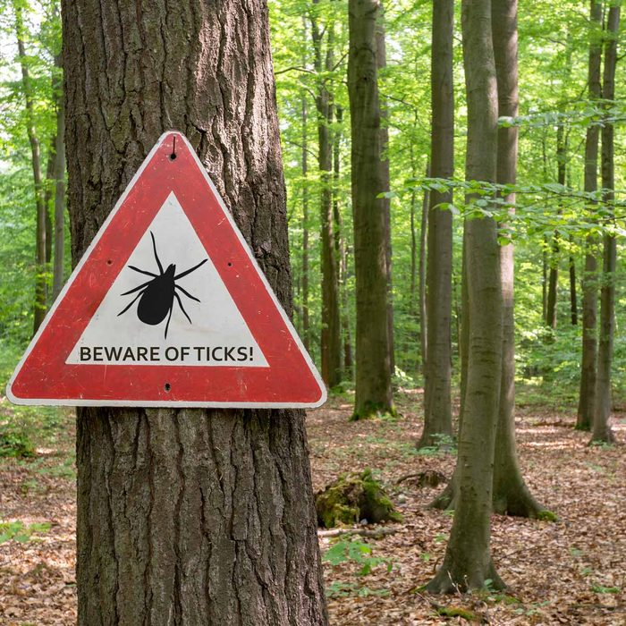 tick insect warning sign woods forest