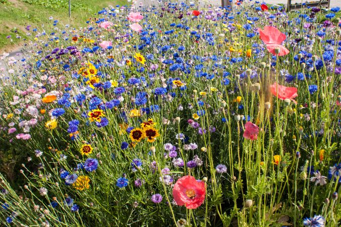 rainbow garden wildflowers