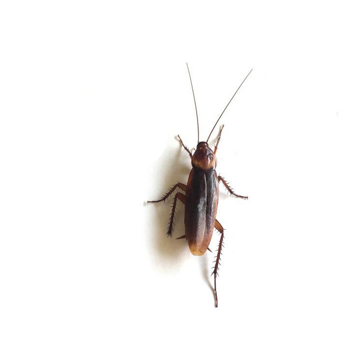 cockroach legs