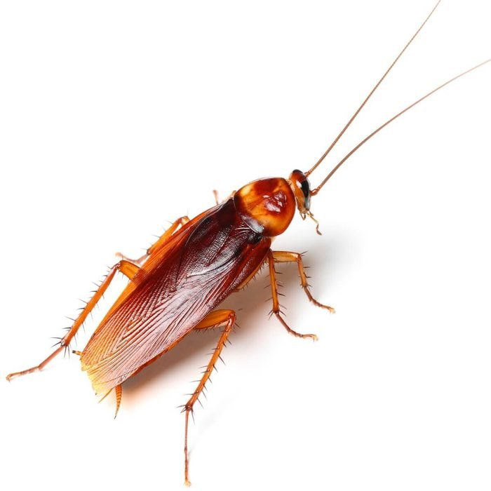 cockroach's name