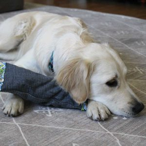 How to Make DIY Dog Toys From Old Clothing