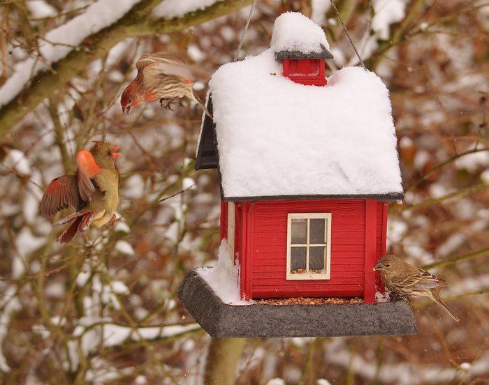 cardinals at a hopper feeder