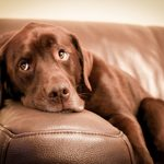 9 Ways to Get That Dog Smell Out of the Couch
