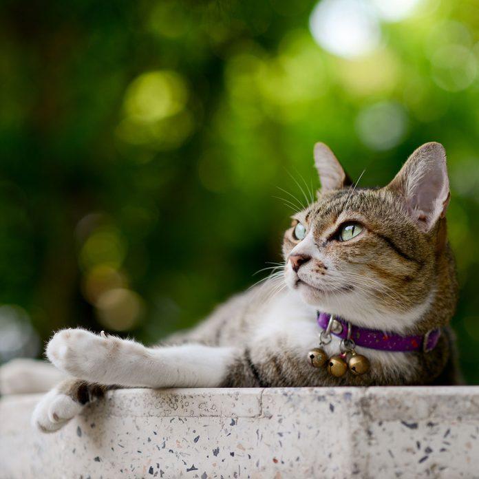Cat wearing a collar