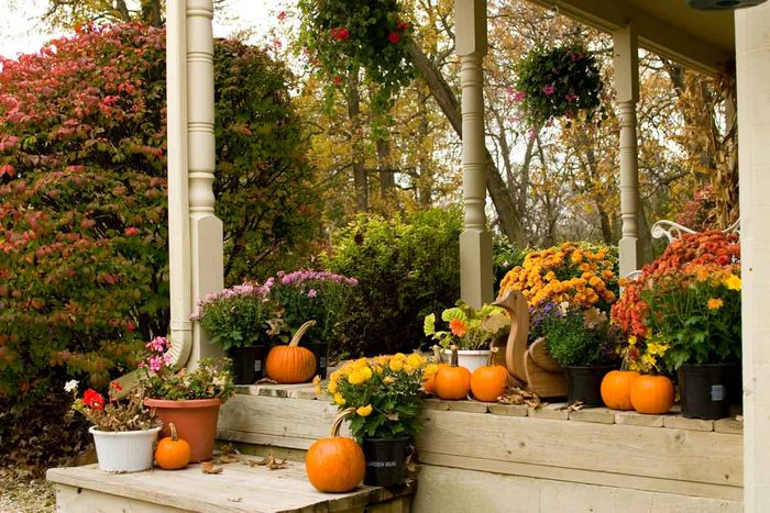 Fall Flowers Gettyimages 172144543