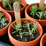 Plant Propagation: How to Multiply Your Plants for Free