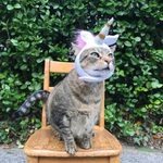 10 Best Halloween Costumes for Cats