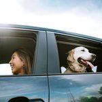 8 Best Car Dog Barriers
