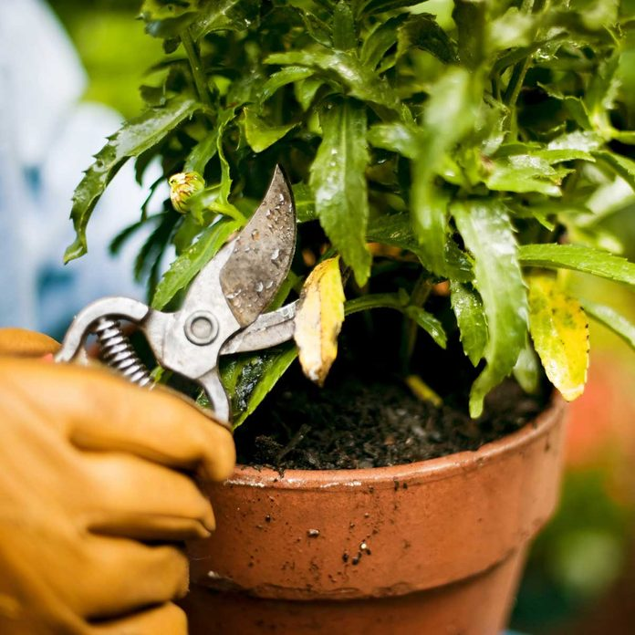 Pruning a plant
